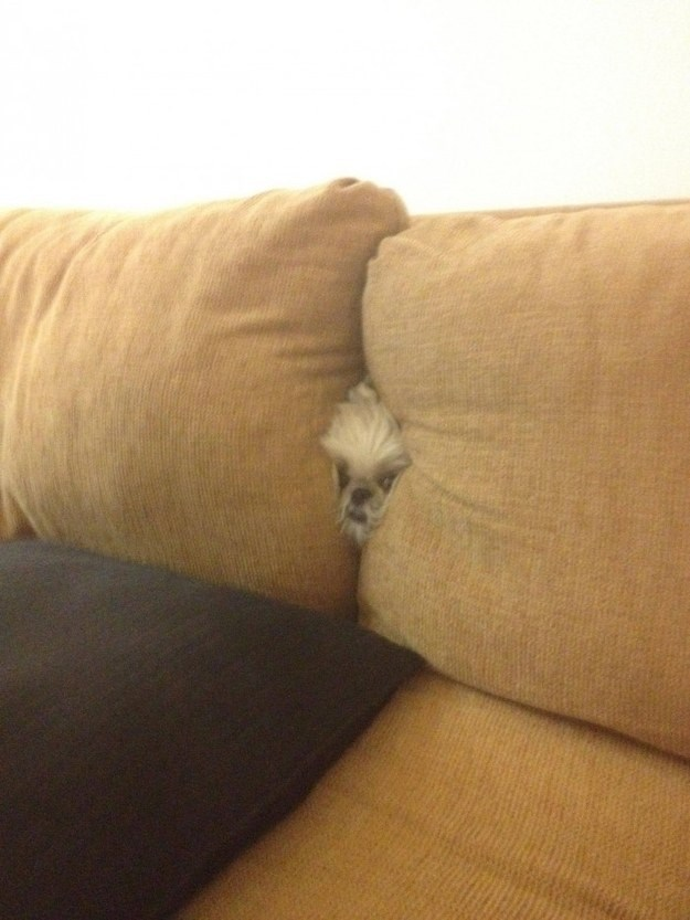 dog stuck in couch
