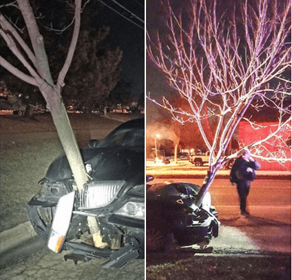 A Woman Crashed Into a Tree and Proceeded to Just Drive Around With It Stuck in the Hood of Her Car