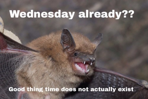 wtf wednesday bat - 8757508608