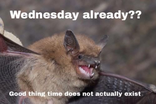 wtf wednesday bat - 8757508608