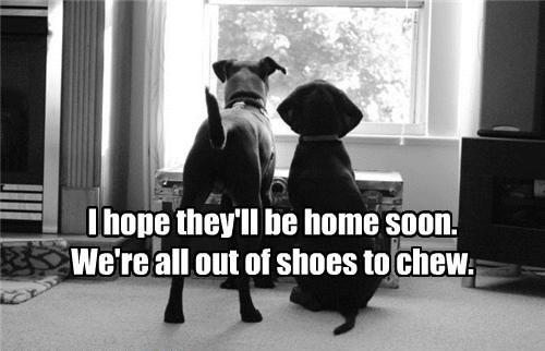 dogs caption - 8757669120