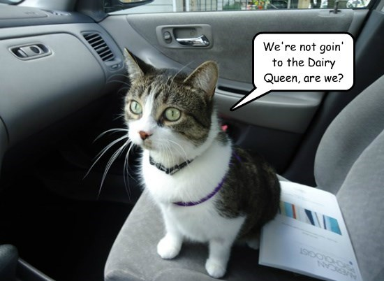 caption Cats - 8757705728