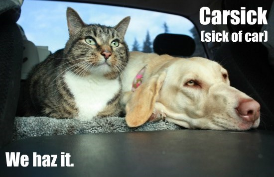 dogs caption Cats - 8757707776