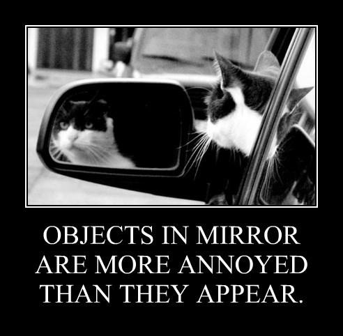 caption Cats - 8757720320