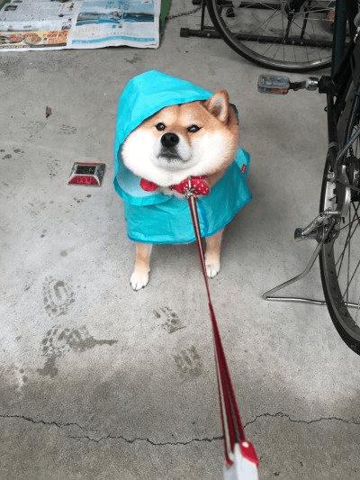 rain doge wow