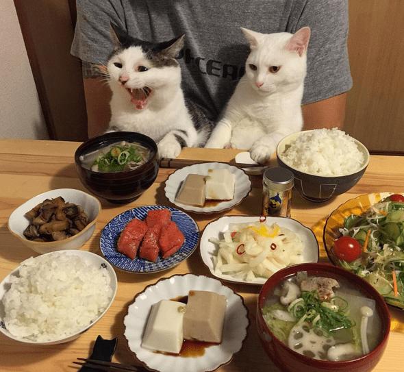 Food - EA