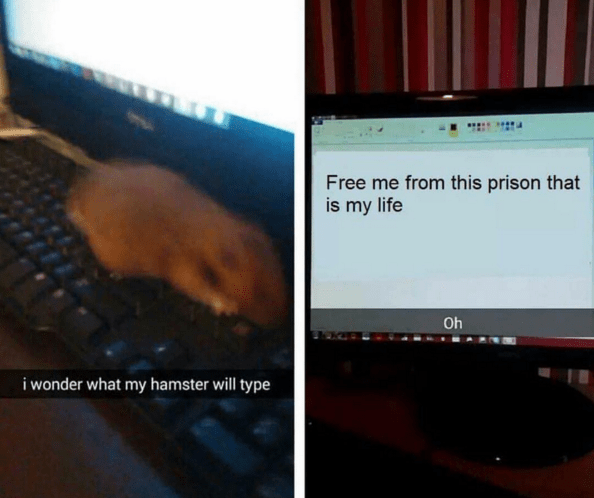 typing hamster - 8757779200