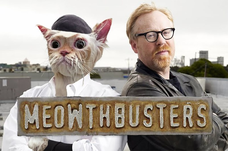 Photo caption - MEONTHBUSTERS
