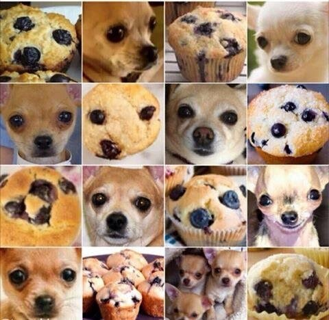 dog or muffin
