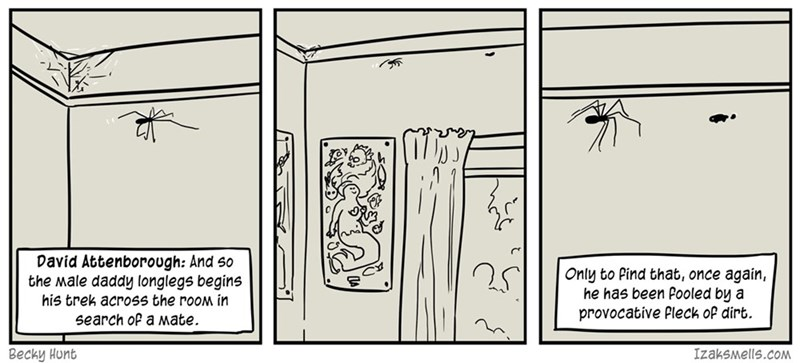 web comics nature spiders Life's Rough for an Indoor Spider