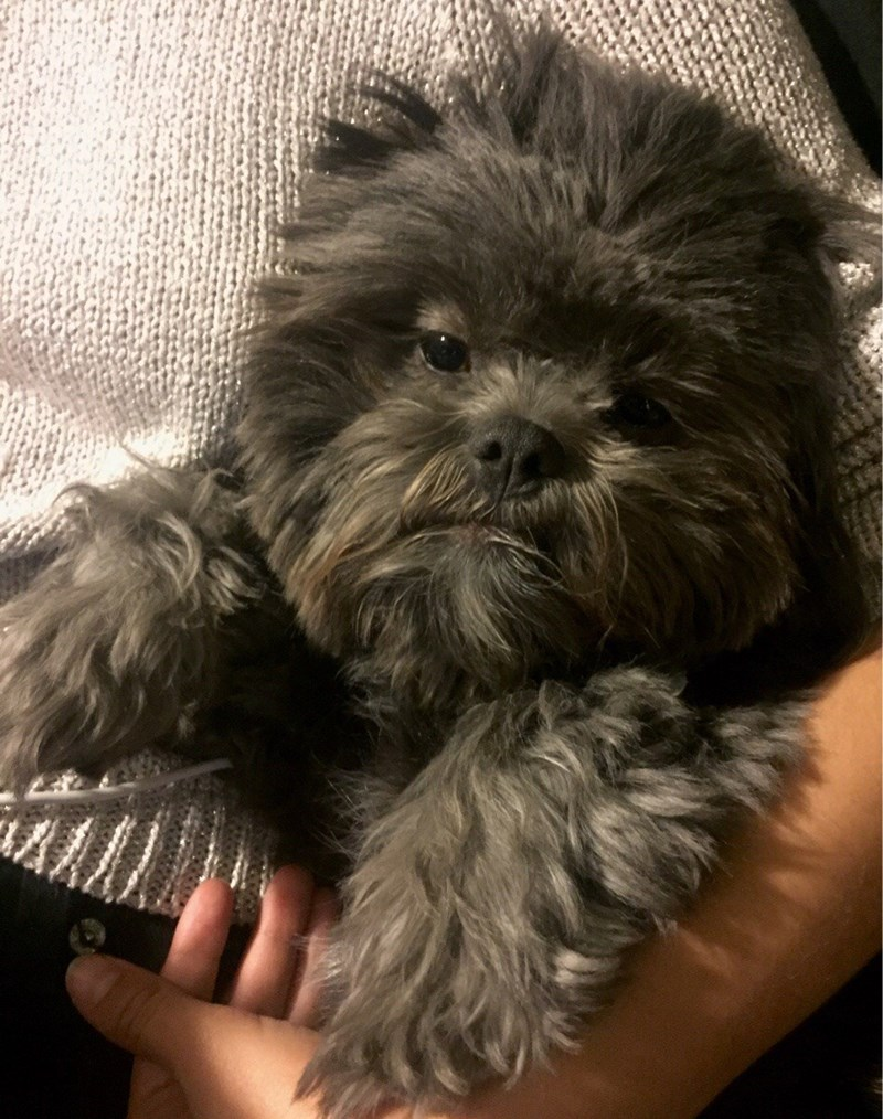 dog looks like an ewok