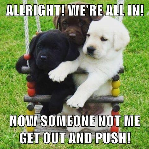 animals dogs caption - 8758116096