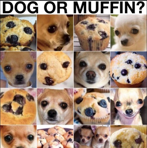 wtf dog or muffin picture