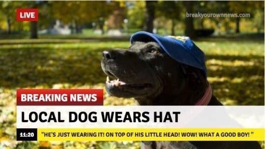 local dog wears hat