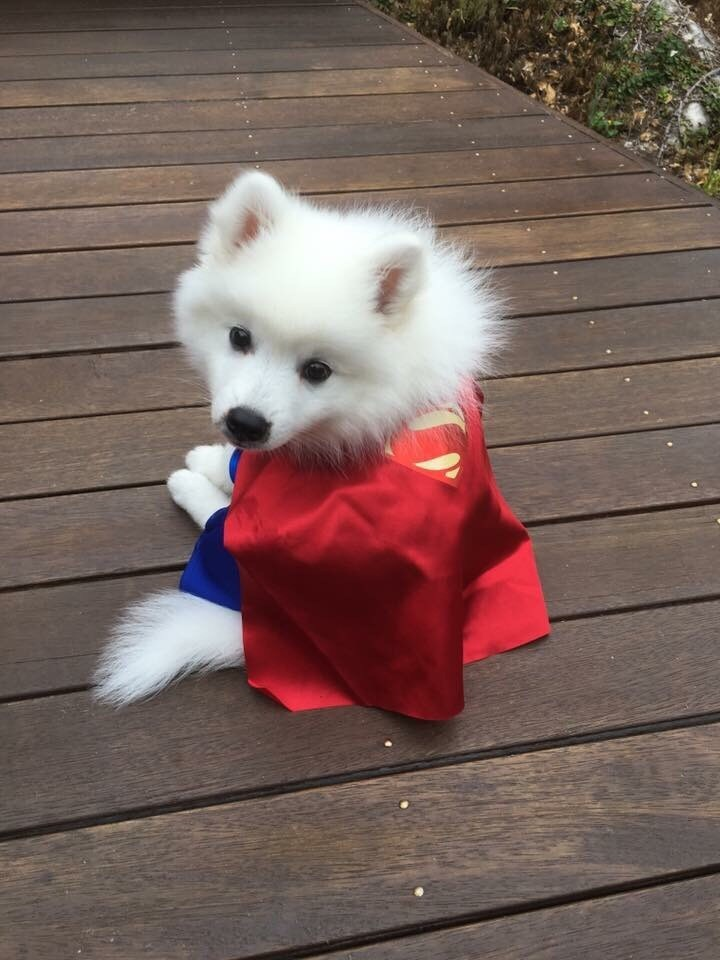 superfloof