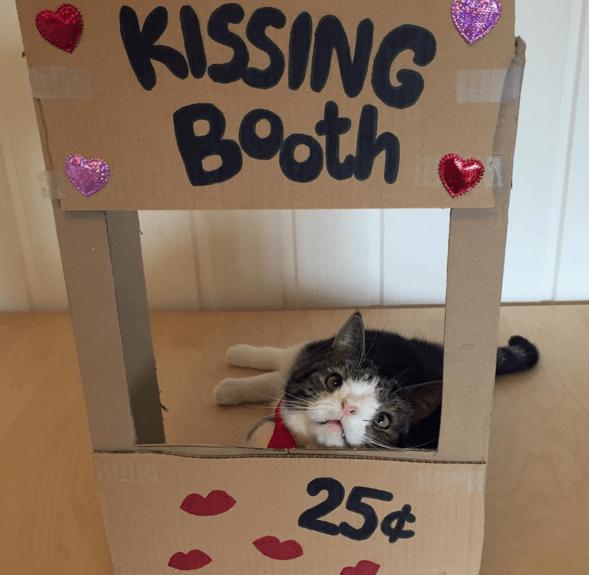Cat - KISSING Both 25¢