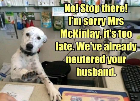 dogs,neutered,husband,caption