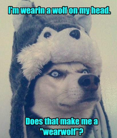 dogs caption - 8758676224