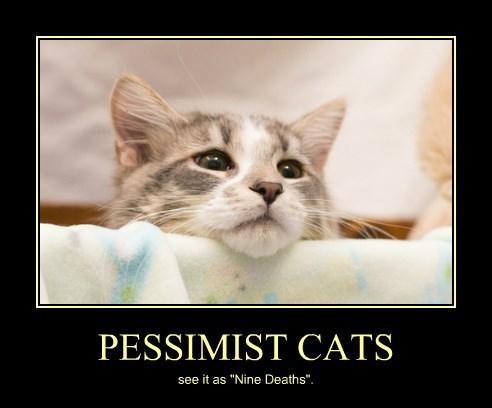 """PESSIMIST CATS see it as """"Nine Deaths""""."""