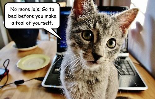 caption Cats - 8758848256