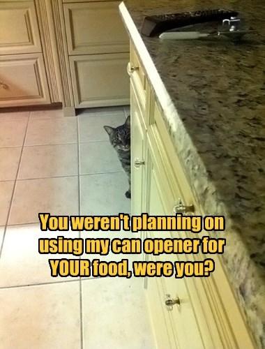 cat caption - 8758935296