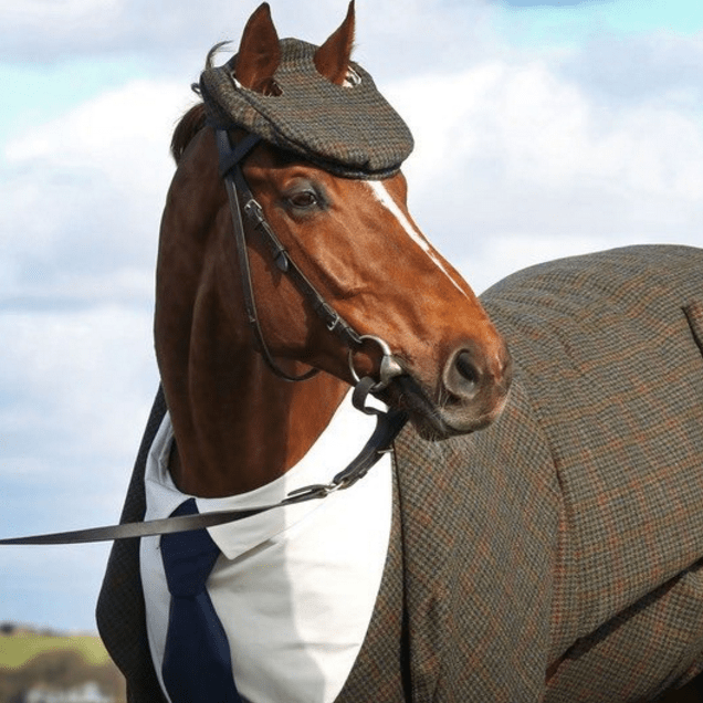 cute horse suit This Racehorse in a Tailored Tweed Suit Is, Quite Possibly, the Best Dressed Animal in the World