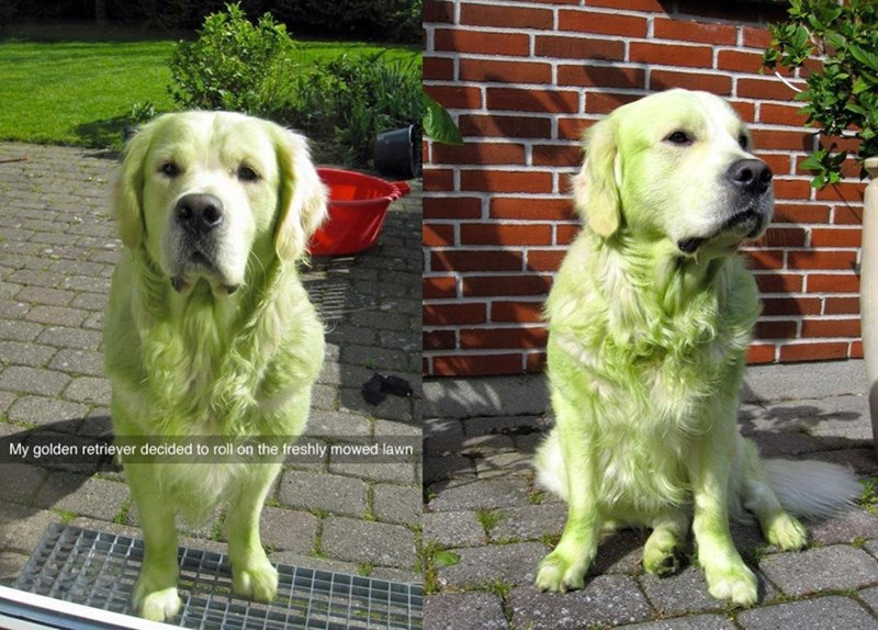 green dog the hulk