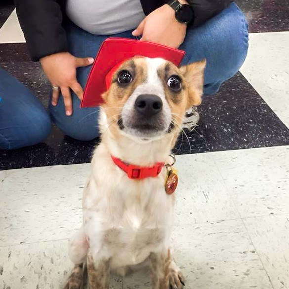 puppy school graduate looks nervous