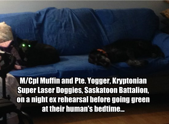 M/Cpl Muffin and Pte. Yogger, Kryptonian Super Laser Doggies, Saskatoon Battalion, on a night ex rehearsal before going green at their human's bedtime...