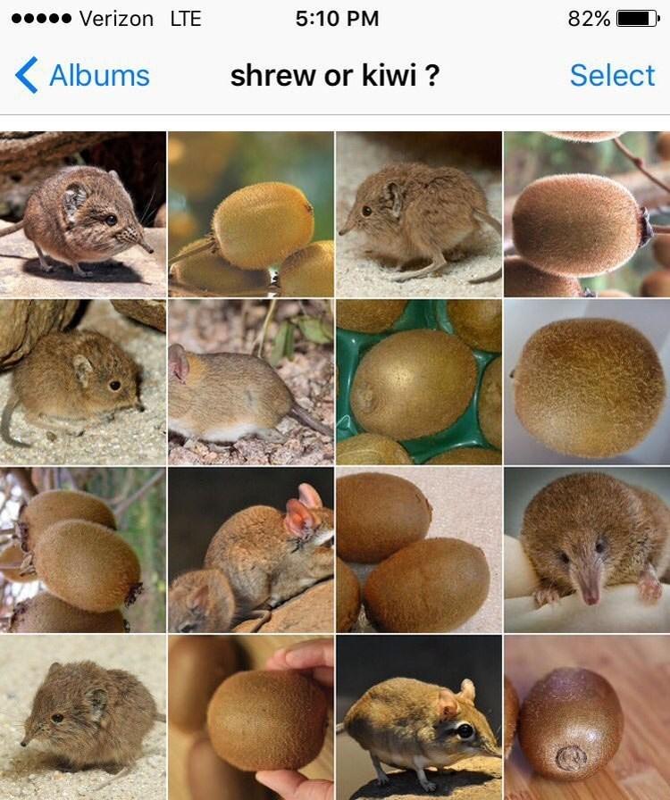 Adaptation - Verizon LTE 5:10 PM 82% shrew or kiwi ? Albums Select