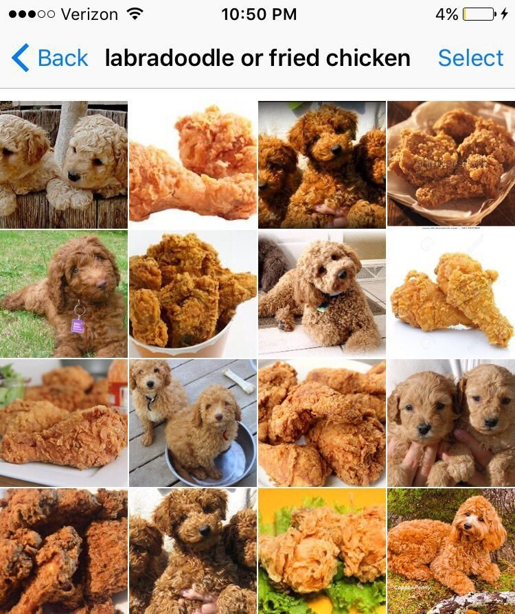 Dog - 0o Verizon 10:50 PM 4% Back labradoodle or fried chicken Select 18119 EPenny