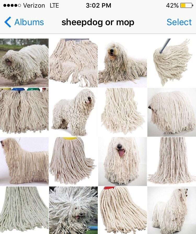 Wool - o Verizon LTE 42% 3:02 PM sheepdog or mop Albums Select