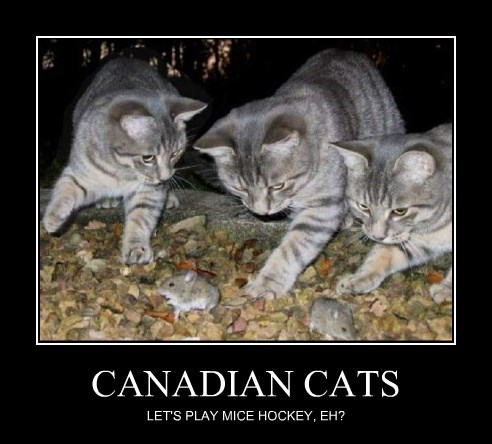 CANADIAN CATS