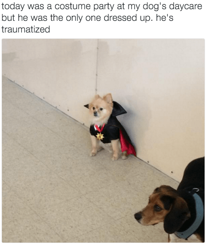 only dog dressed up for costume party