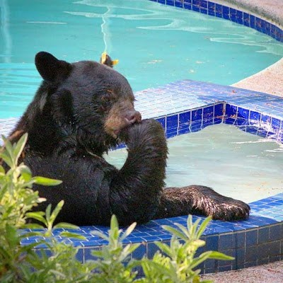 Just Thinkin' About Bear Stuff