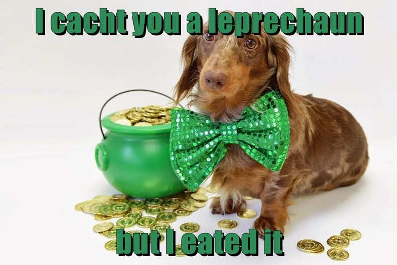 animals dogs St Patrick's Day caption