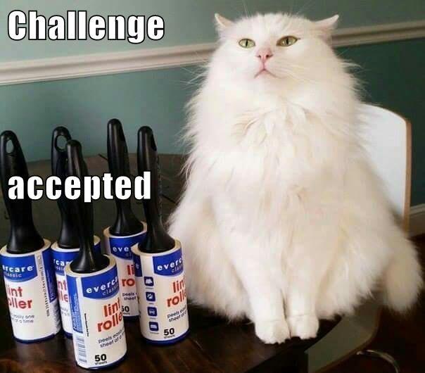 animals caption Cats - 8759377408