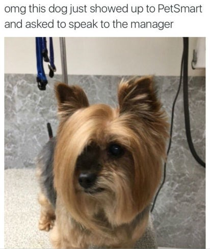 dogs haircut wants to speak to manager