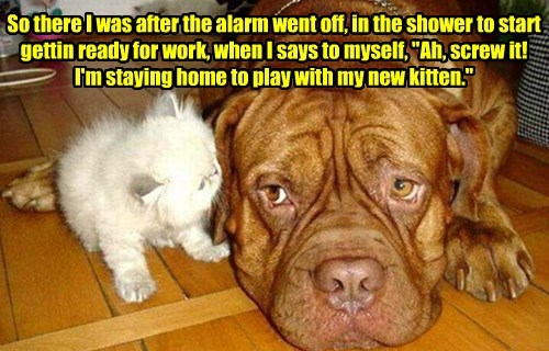 dogs work kitten staying caption home - 8759543808