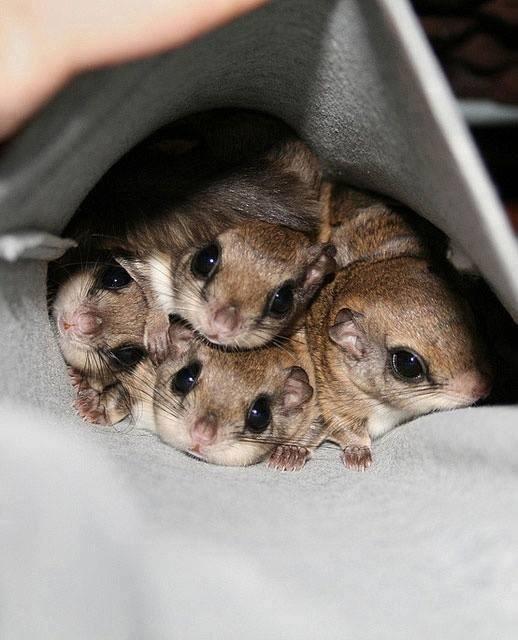 pocket full of cute