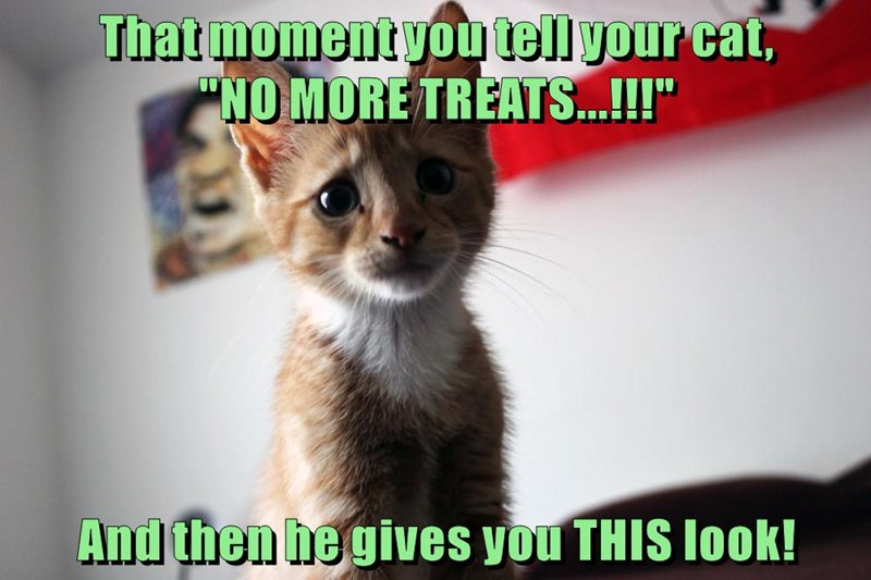 """That moment you tell your cat,                               """"NO MORE TREATS...!!!""""  And then he gives you THIS look!"""