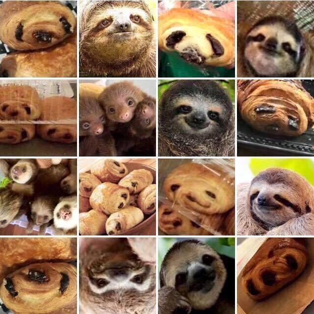 croissant sloths - 8759631104
