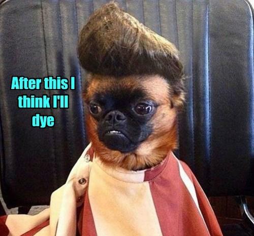 dogs dye caption - 8759634176