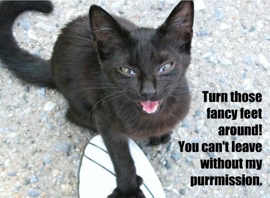 caption Cats - 8759674112