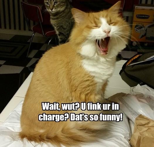 caption Cats - 8760074240