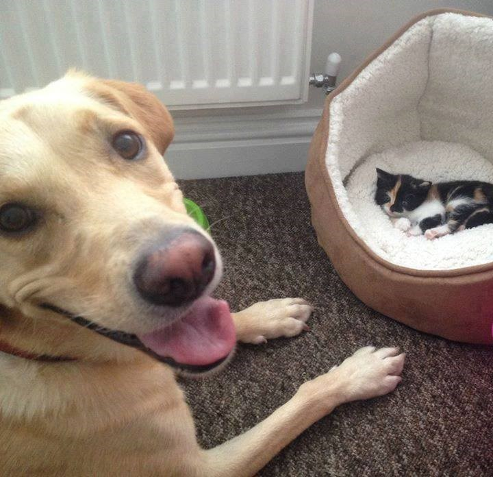 dog loves kitten