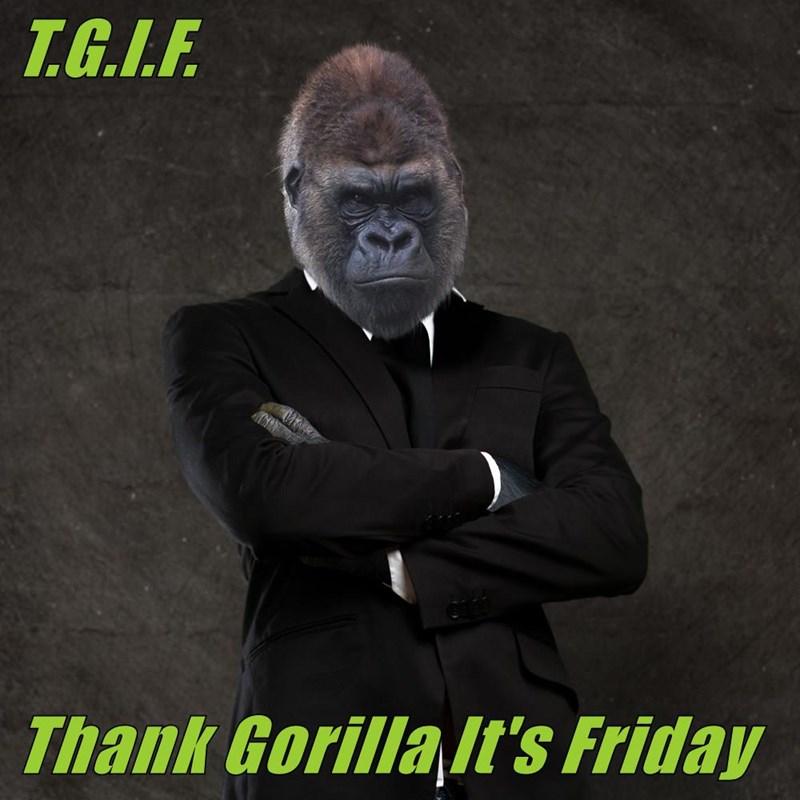 T.G.I.F.  Thank Gorilla It's Friday
