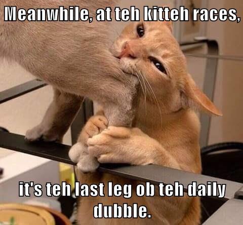 Meanwhile, at teh kitteh races,  it's teh last leg ob teh daily dubble.