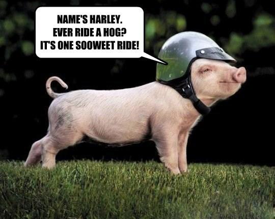 NAME'S HARLEY. EVER RIDE A HOG? IT'S ONE SOOWEET RIDE!