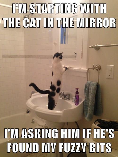 animals caption Cats - 8760307200